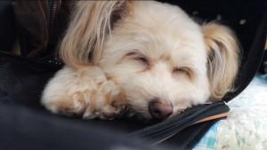 子供やペットの寝顔♥iPhoneカメラで静かに自然な表情を撮影する方法!